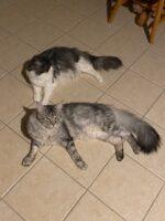 Silvester and Samoi